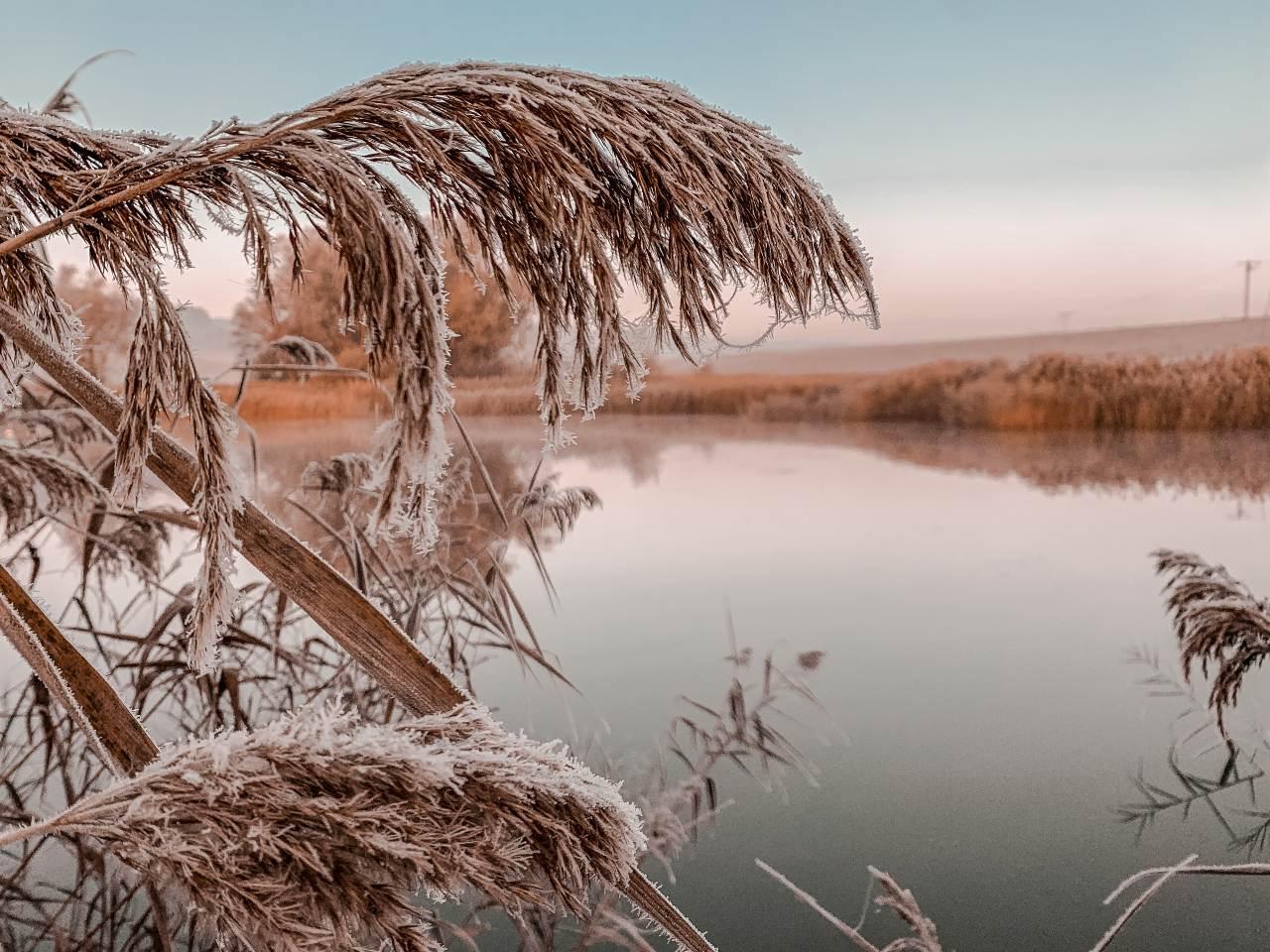 detail rybníka v ranním mraze